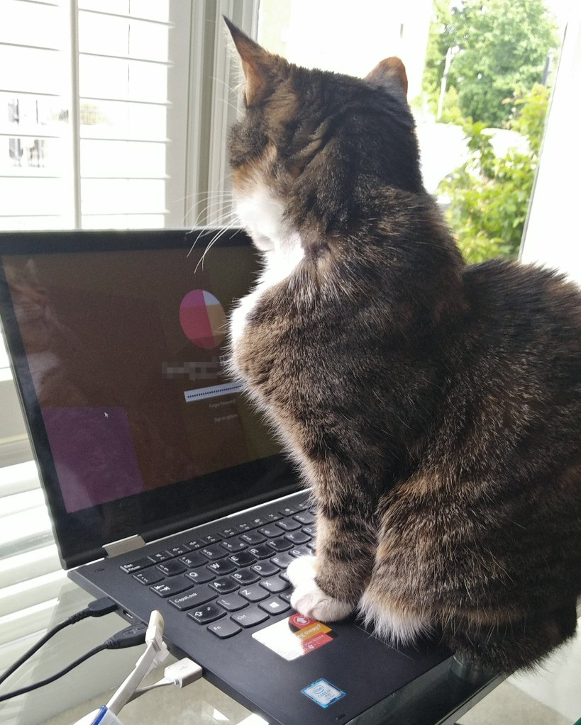 Picture shows a cat with its paws on a laptop. The password screen on the laptop is showing hundreds of ***'s